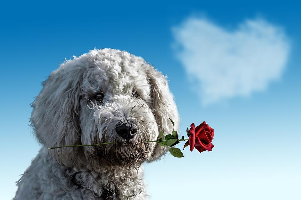 valentines-day-3135789_960_720